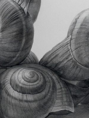 Drawing of shells by Yuya Fujita, YF 358