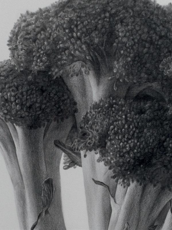 Drawing of broccoli by Yuya Fujita